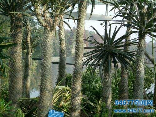 奇闻异事 | 全球十大zuì奇特的植物