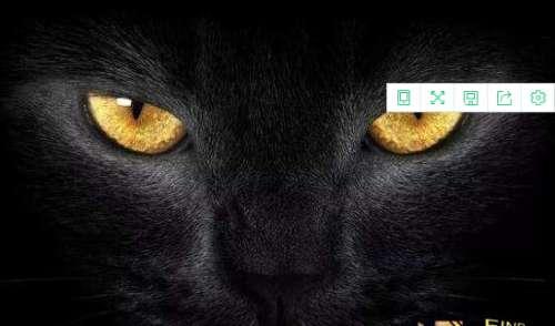 猫不可靠近死尸试验,超强的静电作用造成尸体直立