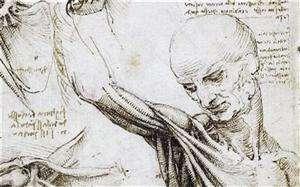 达芬奇人体解剖图生动清晰:共解剖30多具尸体