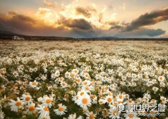 世界十大绝美花海,每一处都是美丽làng漫的zuì佳告白之地