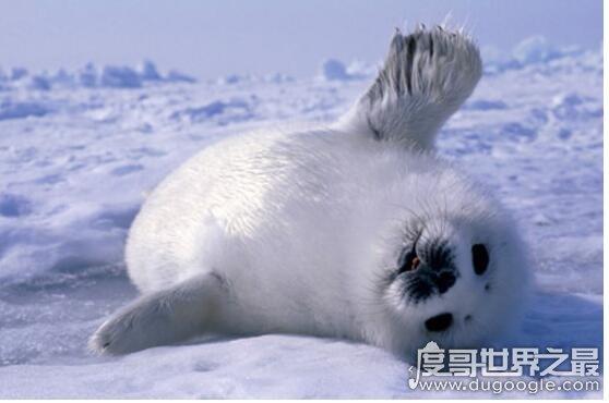 世界上皮毛zuì保暖的动物排名,北极熊zuì不怕冷(有浓密保暖的皮毛)