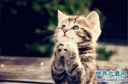 世界上最可爱的十种猫品种,让你瞬间变猫奴