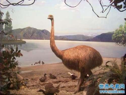 恐鸟是最近一个灭绝的古生物,证明都是人类活动造成