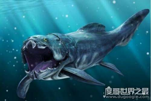 史前海洋巨兽邓氏鱼有天敌吗,处于海洋顶级猎食者地位(没有天敌)